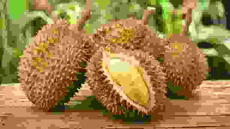 دوريان (Durian)